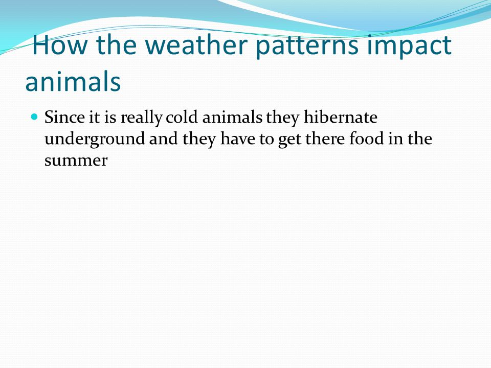 How the weather patterns impact animals Since it is really cold animals they hibernate underground and they have to get there food in the summer