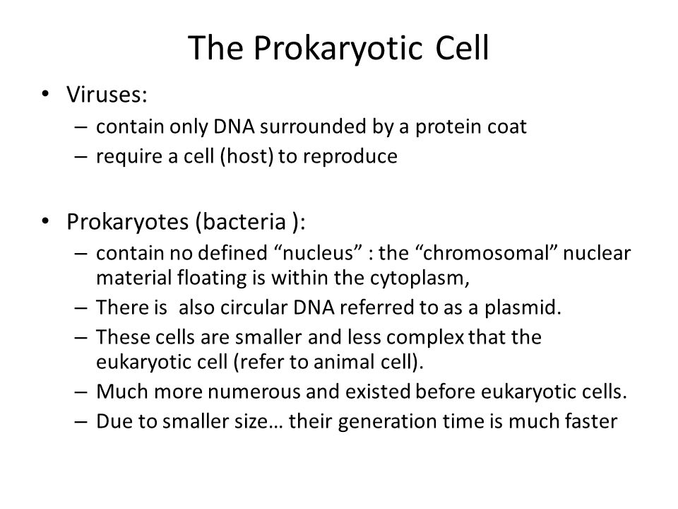 The Prokaryotic Cell Viruses: – contain only DNA surrounded by a protein coat – require a cell (host) to reproduce Prokaryotes (bacteria ): – contain no defined nucleus : the chromosomal nuclear material floating is within the cytoplasm, – There is also circular DNA referred to as a plasmid.