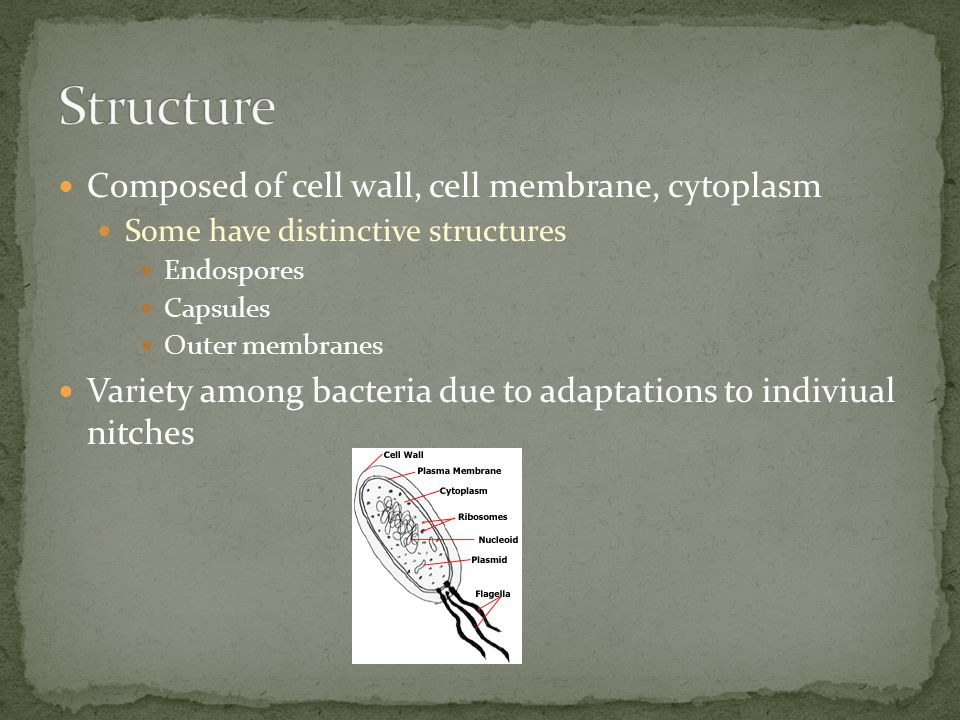 Composed of cell wall, cell membrane, cytoplasm Some have distinctive structures Endospores Capsules Outer membranes Variety among bacteria due to ada