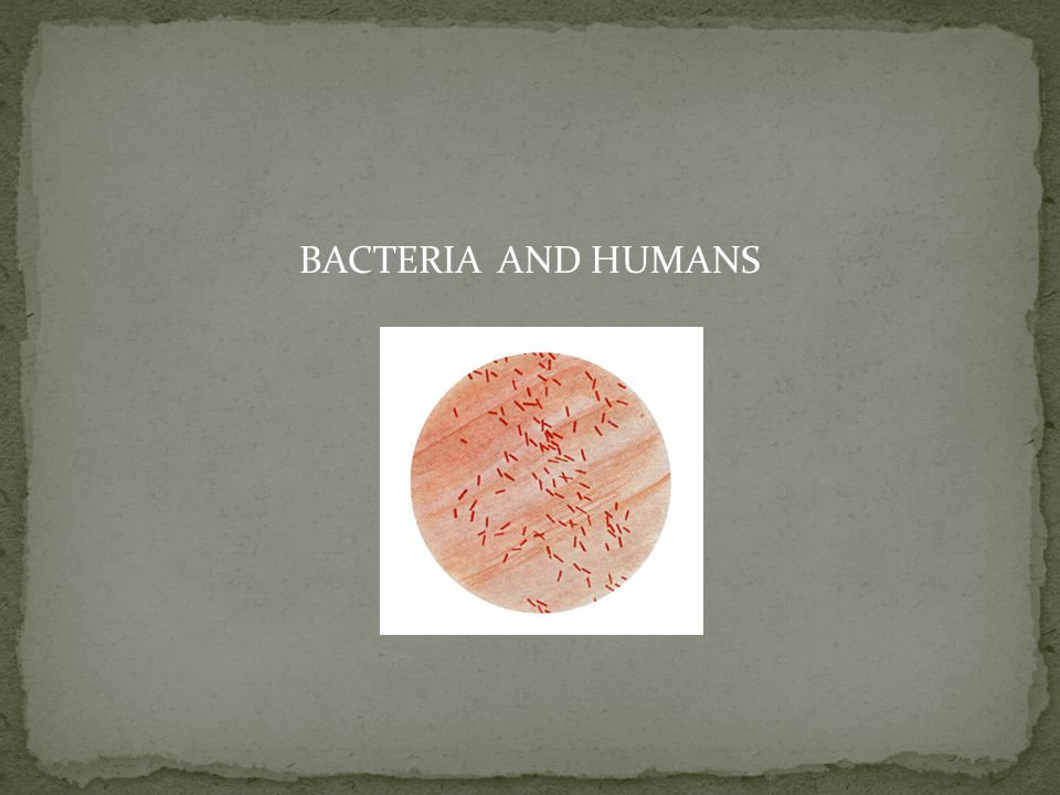 BACTERIA AND HUMANS