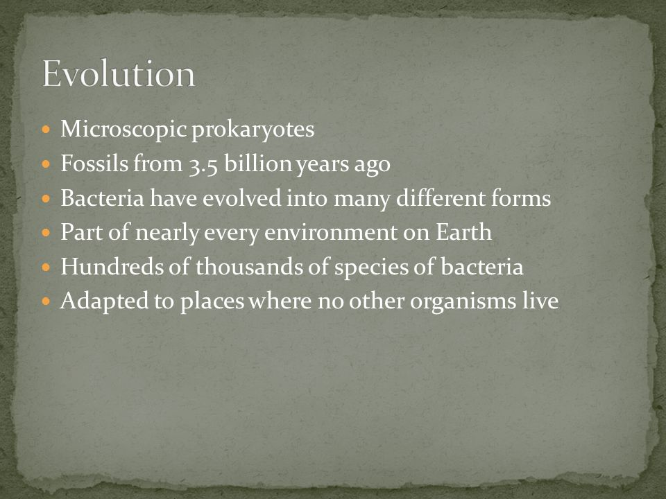 Microscopic prokaryotes Fossils from 3.5 billion years ago Bacteria have evolved into many different forms Part of nearly every environment on Earth H