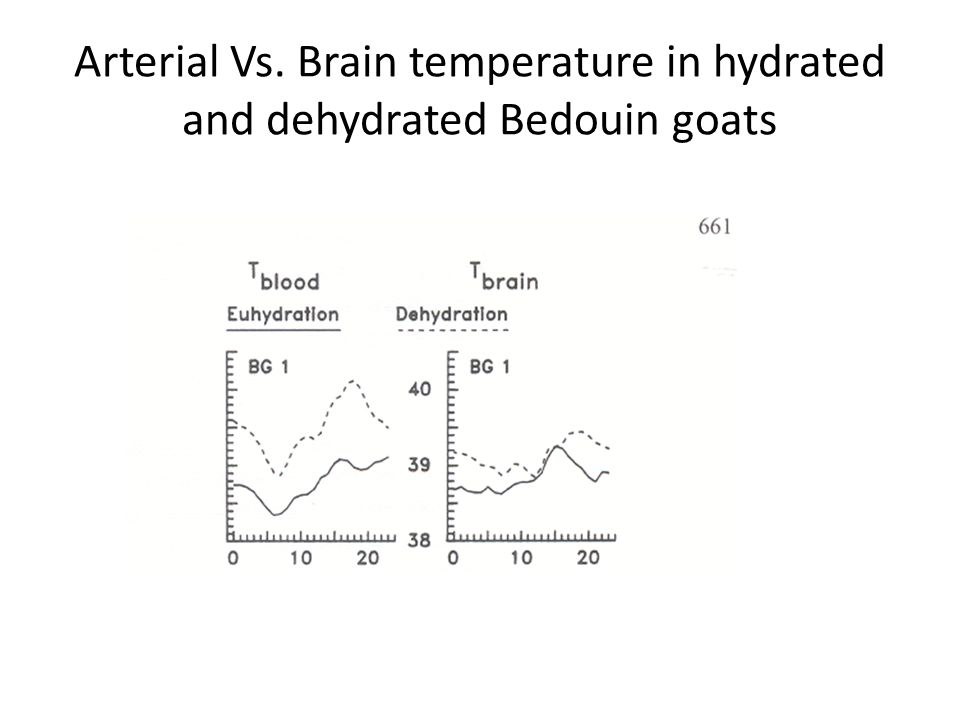 Arterial Vs. Brain temperature in hydrated and dehydrated Bedouin goats