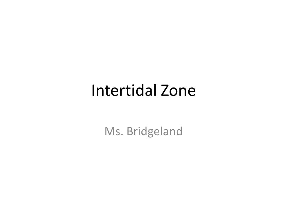Intertidal Zone Ms. Bridgeland