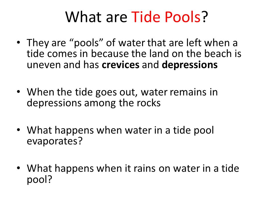 "What are Tide Pools? They are ""pools"" of water that are left when a tide comes in because the land on the beach is uneven and has crevices and depress"