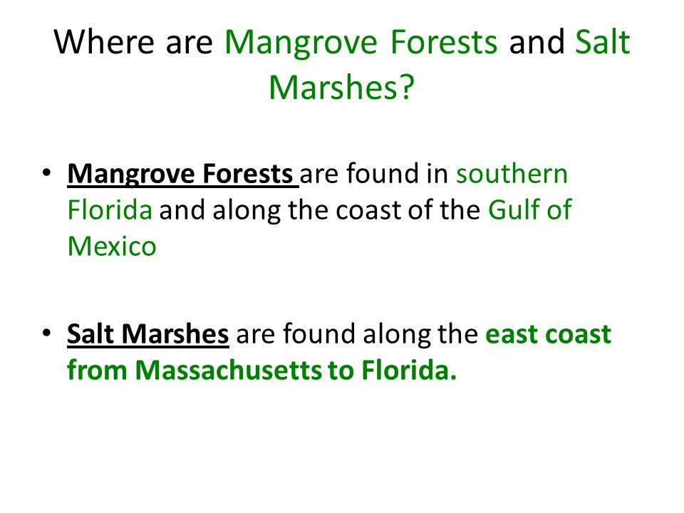Where are Mangrove Forests and Salt Marshes? Mangrove Forests are found in southern Florida and along the coast of the Gulf of Mexico Salt Marshes are