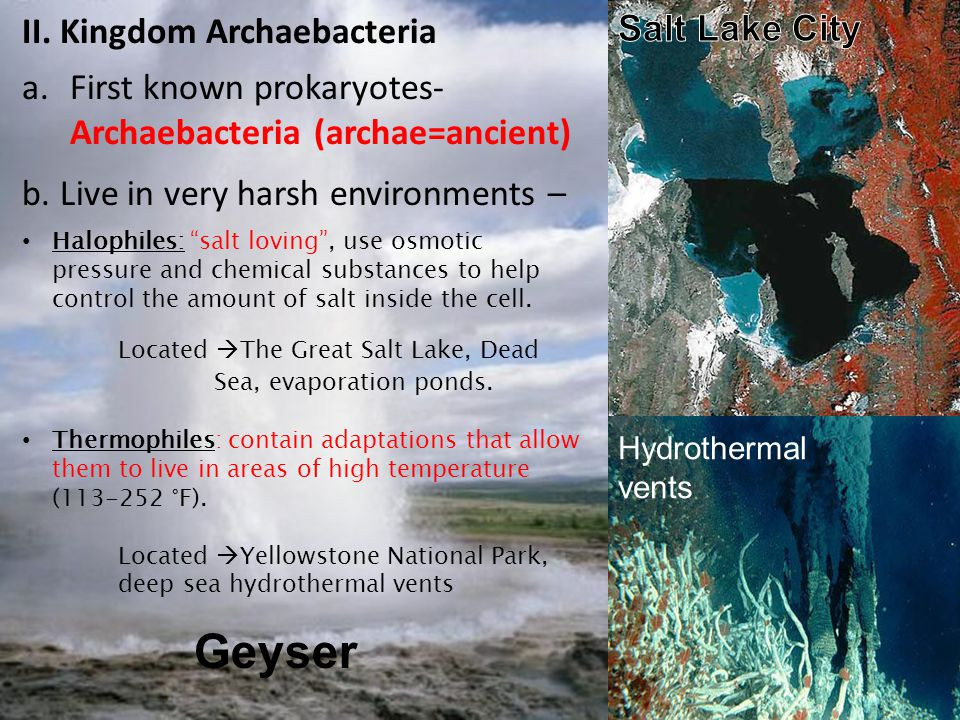 """Geyser II. Kingdom Archaebacteria a.First known prokaryotes- Archaebacteria (archae=ancient) b. Live in very harsh environments – Halophiles: """"salt lo"""