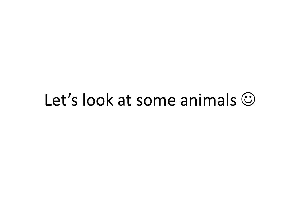 Let's look at some animals
