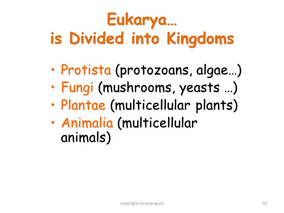 32 Eukarya… is Divided into Kingdoms Protista (protozoans, algae…)Protista (protozoans, algae…) Fungi (mushrooms, yeasts …)Fungi (mushrooms, yeasts …) Plantae (multicellular plants)Plantae (multicellular plants) Animalia (multicellular animals)Animalia (multicellular animals) copyright cmassengale