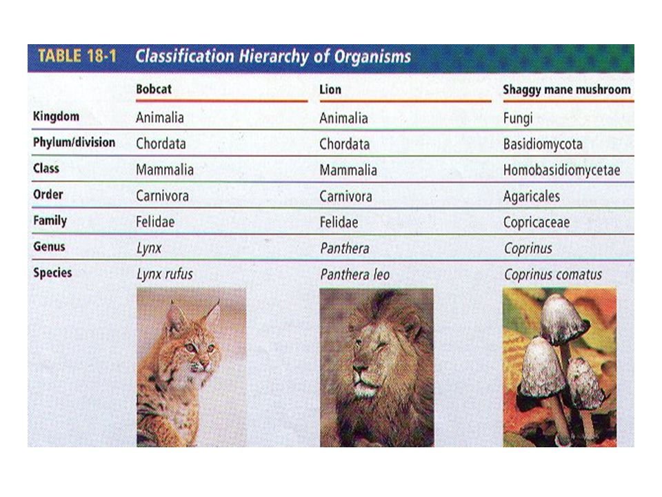 20 Scientific Names are Understood by all Taxonomists copyright cmassengale