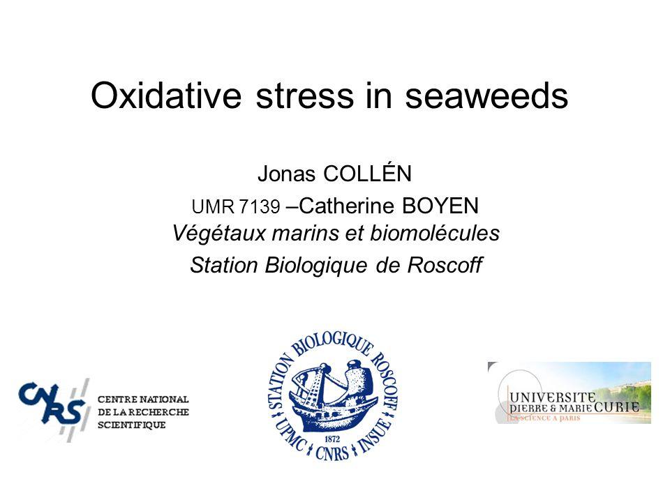 Oxidative stress in seaweeds Jonas COLLÉN UMR 7139 –Catherine BOYEN Végétaux marins et biomolécules Station Biologique de Roscoff