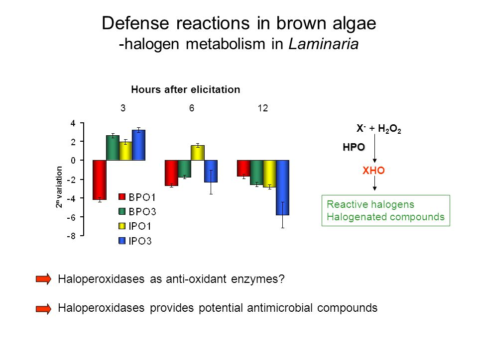 Hours after elicitation 3612 Haloperoxidases as anti-oxidant enzymes? Haloperoxidases provides potential antimicrobial compounds 2 n variation X - + H