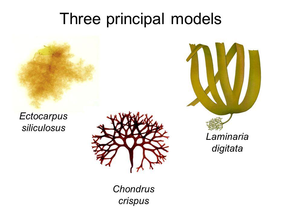Three principal models Ectocarpus siliculosus Laminaria digitata Chondrus crispus