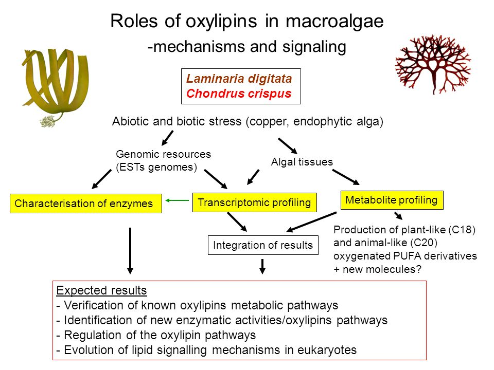 Laminaria digitata Chondrus crispus Abiotic and biotic stress (copper, endophytic alga) Roles of oxylipins in macroalgae -mechanisms and signaling Expected results - Verification of known oxylipins metabolic pathways - Identification of new enzymatic activities/oxylipins pathways - Regulation of the oxylipin pathways - Evolution of lipid signalling mechanisms in eukaryotes Characterisation of enzymes Transcriptomic profiling Metabolite profiling Integration of results Genomic resources (ESTs genomes) Algal tissues Production of plant-like (C18) and animal-like (C20) oxygenated PUFA derivatives + new molecules?