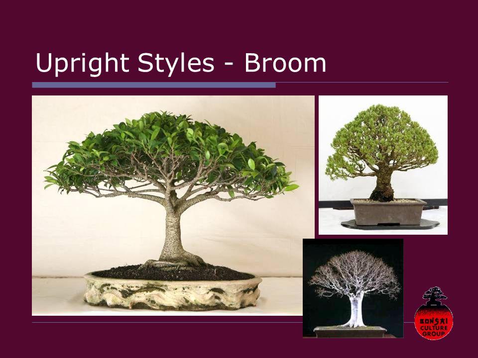 Upright Styles - Broom