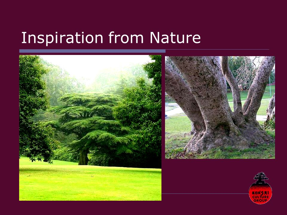 Inspiration from Nature