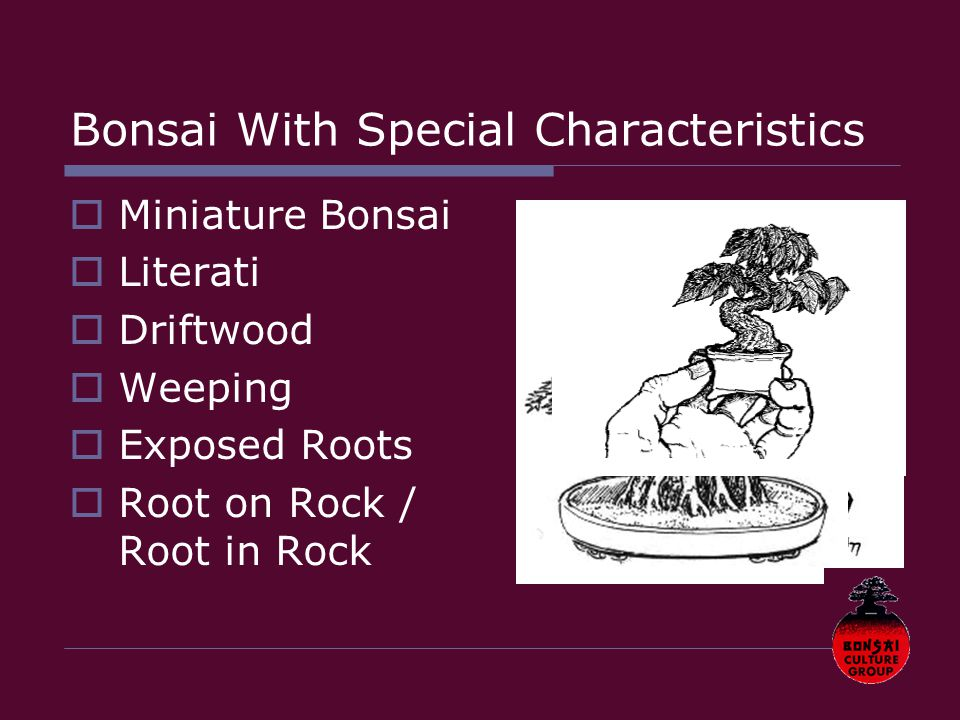  Miniature Bonsai  Literati  Driftwood  Weeping  Exposed Roots  Root on Rock / Root in Rock Bonsai With Special Characteristics