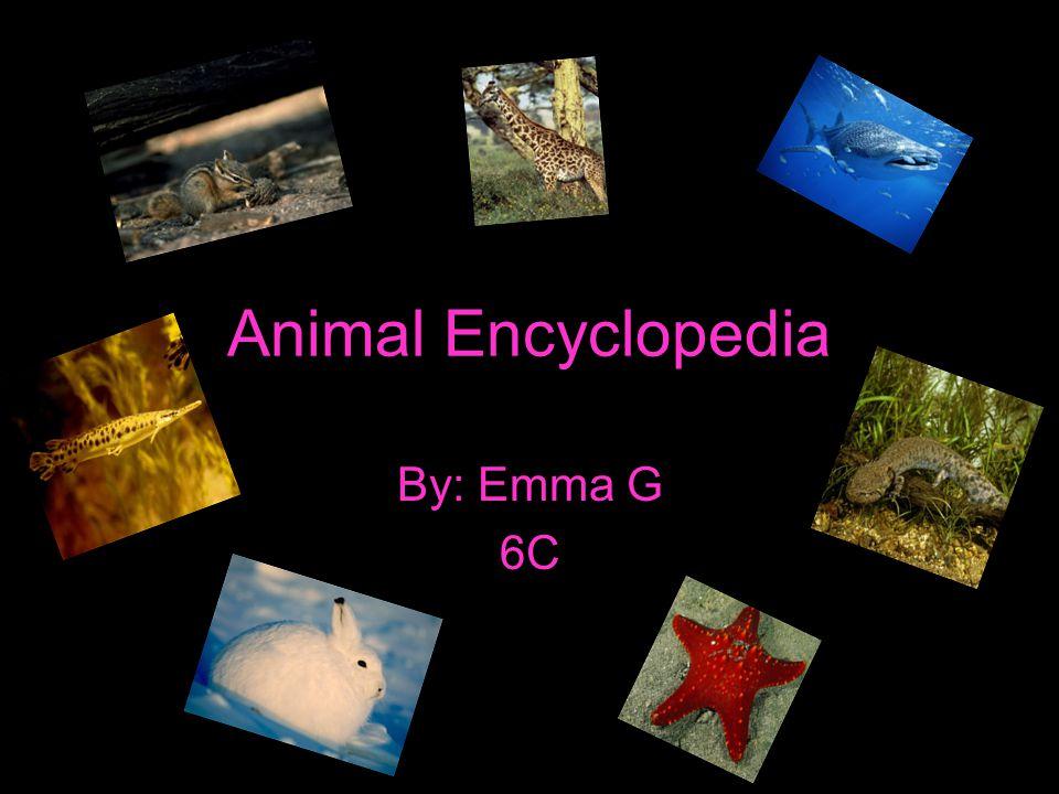 Table of contents Giraffe Taimias chipmunk Mudpuppy Whale shark Gar Arctic hare Star fish