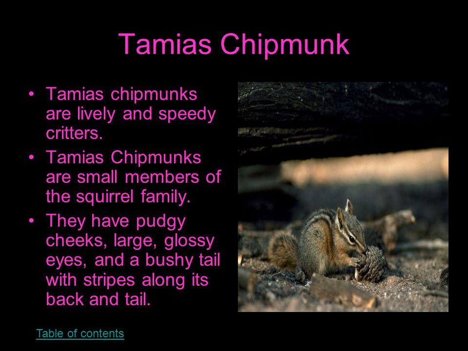Mudpuppy Mudpuppies are also called waterdogs.