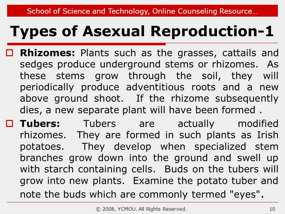 School of Science and Technology, Online Counseling Resource… Types of Asexual Reproduction-1  Rhizomes: Plants such as the grasses, cattails and sedges produce underground stems or rhizomes.