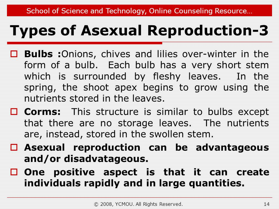 School of Science and Technology, Online Counseling Resource… Types of Asexual Reproduction-3  Bulbs :Onions, chives and lilies over-winter in the form of a bulb.