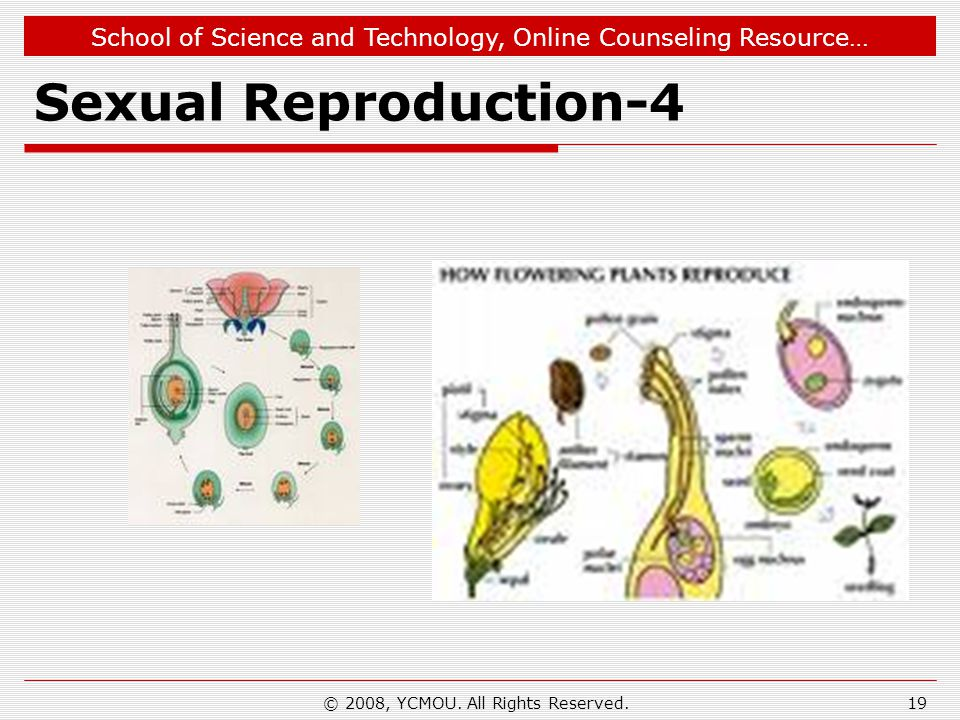 School of Science and Technology, Online Counseling Resource… Sexual Reproduction-4 © 2008, YCMOU. All Rights Reserved.19