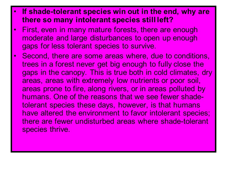 If shade-tolerant species win out in the end, why are there so many intolerant species still left? First, even in many mature forests, there are enoug