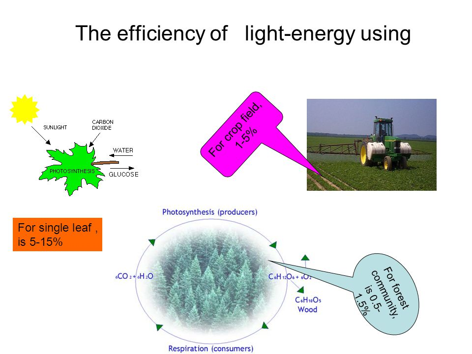 The efficiency of light-energy using For forest community, is 0.5- 1.5% For single leaf, is 5-15% For crop field, 1-5%