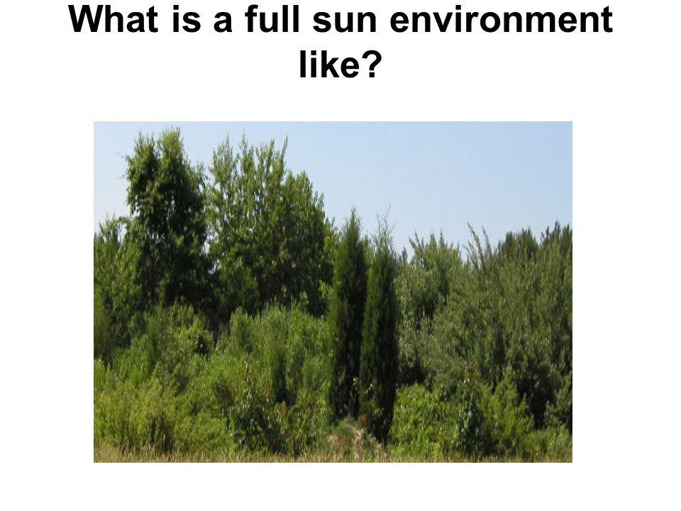 What is a full sun environment like?