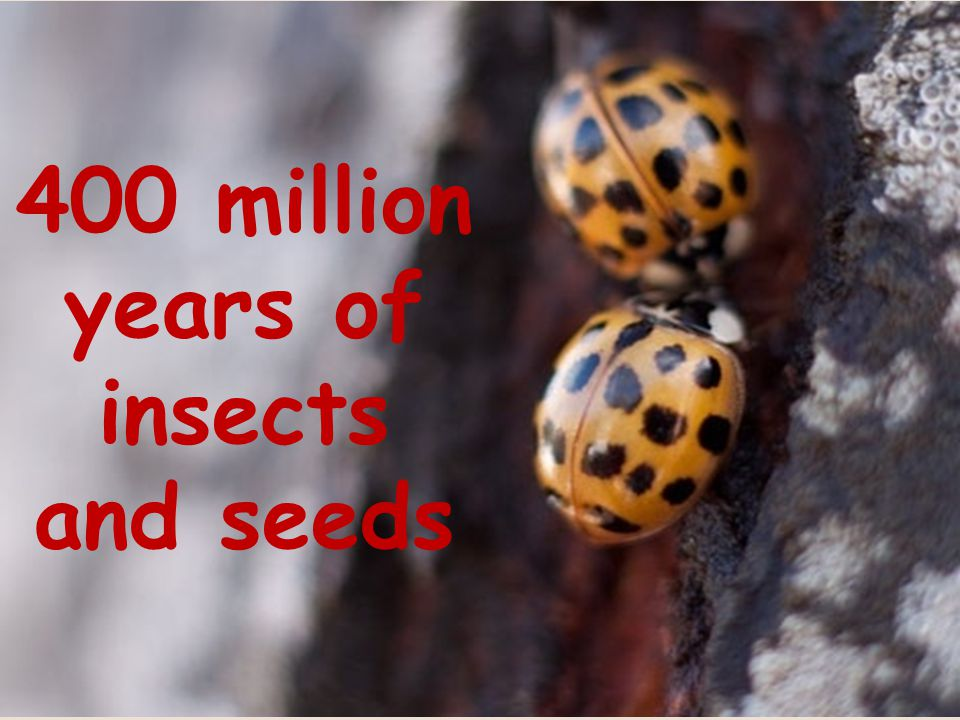 400 million years of insects and seeds