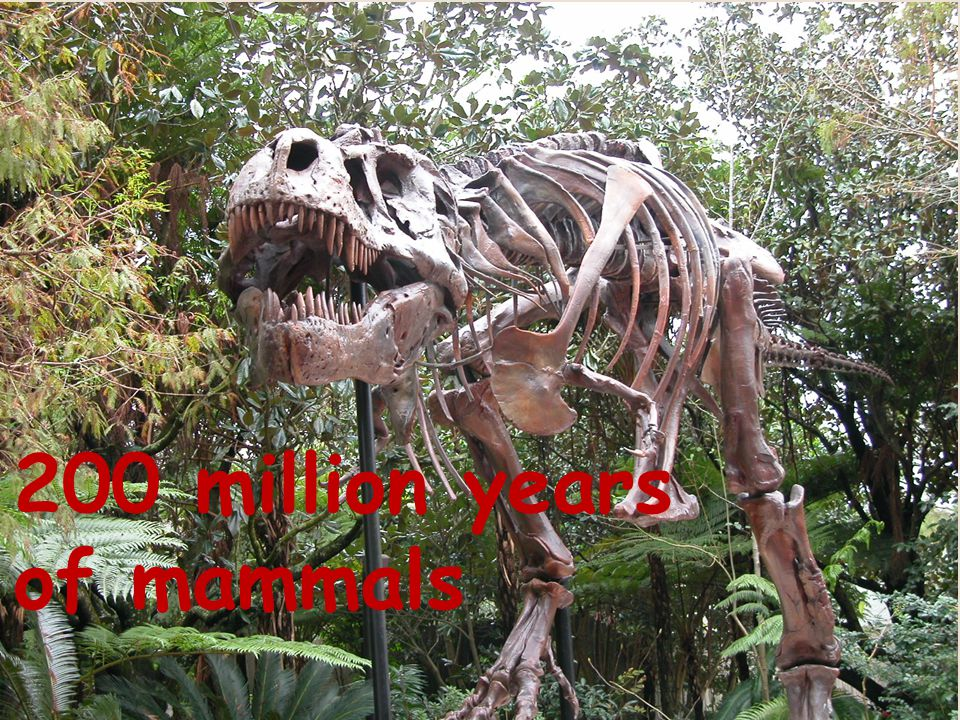 200 million years of mammals