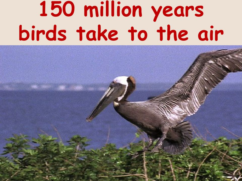 150 million years birds take to the air