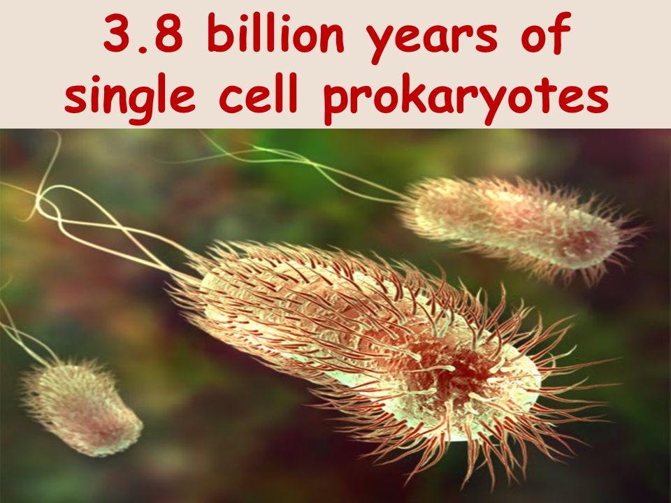 3.8 billion years of single cell prokaryotes
