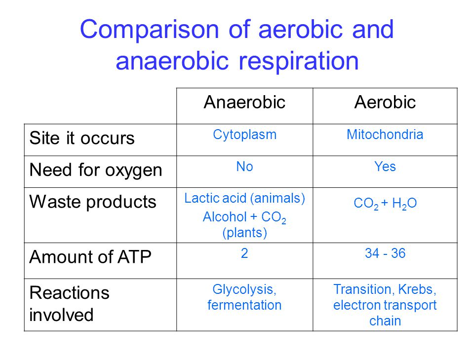 Comparison of aerobic and anaerobic respiration AnaerobicAerobic Site it occurs CytoplasmMitochondria Need for oxygen NoYes Waste products Lactic acid (animals) Alcohol + CO 2 (plants) CO 2 + H 2 O Amount of ATP 234 - 36 Reactions involved Glycolysis, fermentation Transition, Krebs, electron transport chain