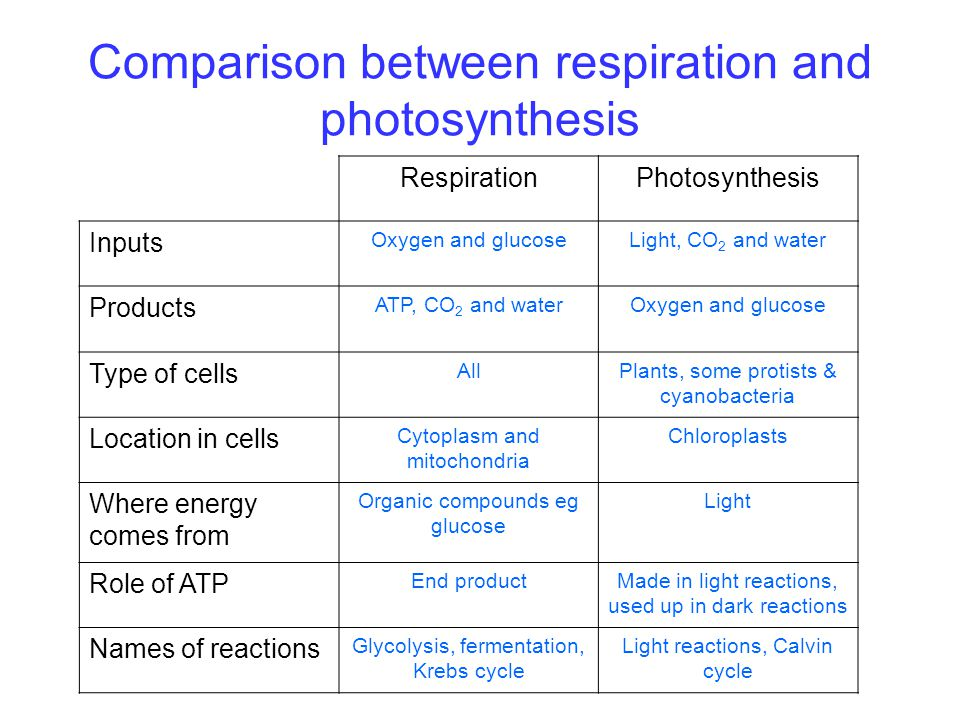 Comparison between respiration and photosynthesis RespirationPhotosynthesis Inputs Oxygen and glucoseLight, CO 2 and water Products ATP, CO 2 and wate