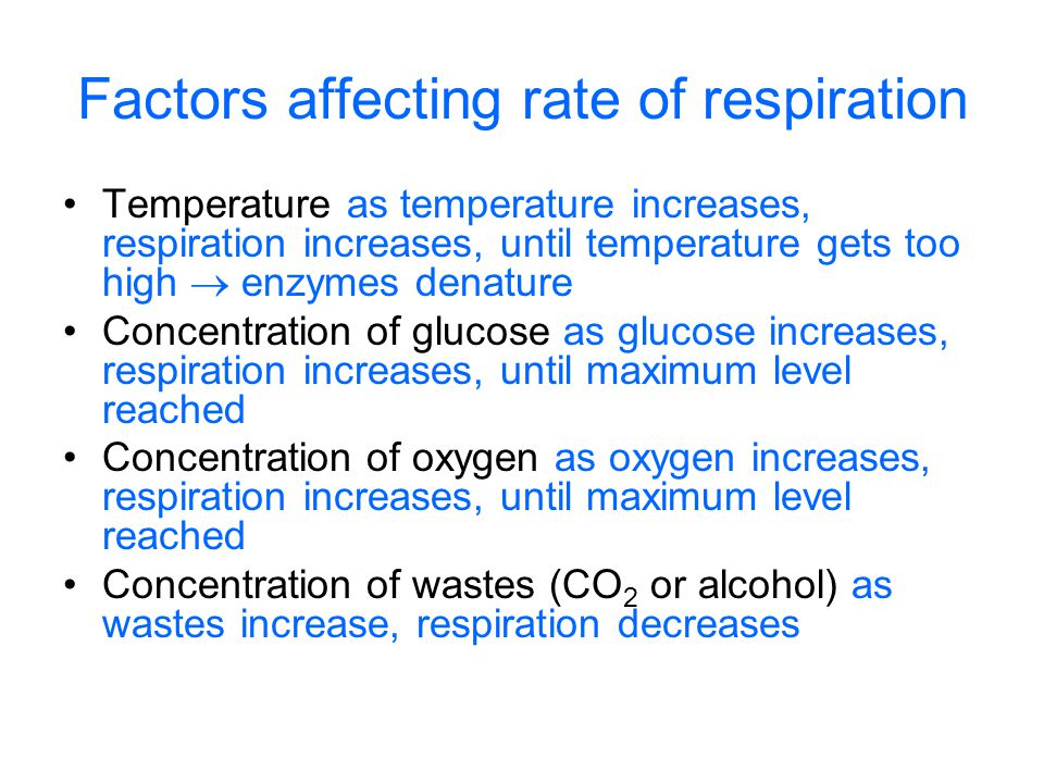 Factors affecting rate of respiration Temperature as temperature increases, respiration increases, until temperature gets too high  enzymes denature Concentration of glucose as glucose increases, respiration increases, until maximum level reached Concentration of oxygen as oxygen increases, respiration increases, until maximum level reached Concentration of wastes (CO 2 or alcohol) as wastes increase, respiration decreases