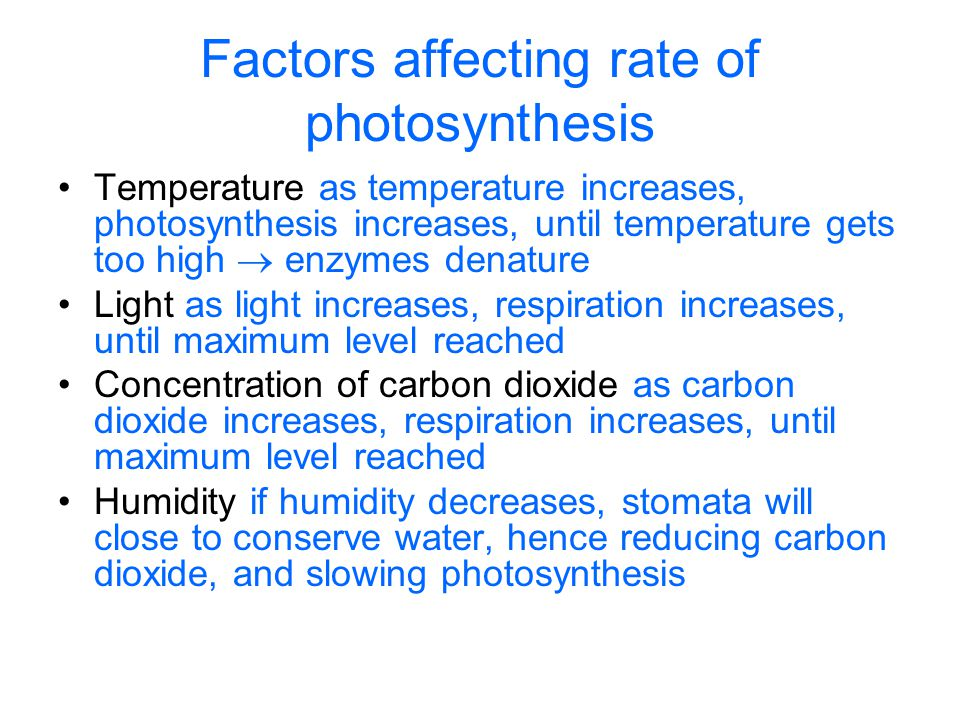 Factors affecting rate of photosynthesis Temperature as temperature increases, photosynthesis increases, until temperature gets too high  enzymes den