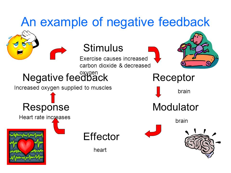 An example of negative feedback Stimulus Negative feedbackReceptor ResponseModulator Effector Exercise causes increased carbon dioxide & decreased oxygen brain heart Heart rate increases Increased oxygen supplied to muscles
