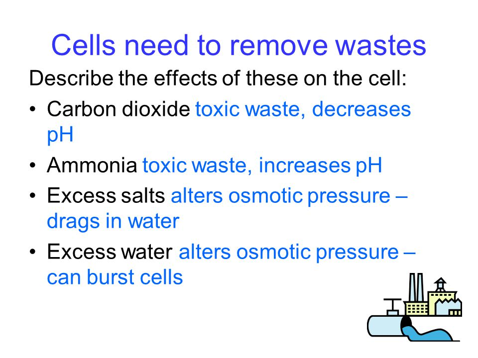 Cells need to remove wastes Describe the effects of these on the cell: Carbon dioxide toxic waste, decreases pH Ammonia toxic waste, increases pH Excess salts alters osmotic pressure – drags in water Excess water alters osmotic pressure – can burst cells