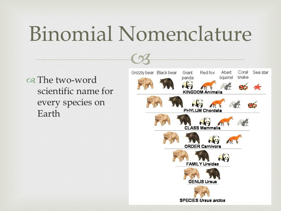   The two-word scientific name for every species on Earth Binomial Nomenclature
