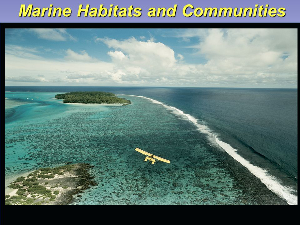 Marine Habitats and Communities