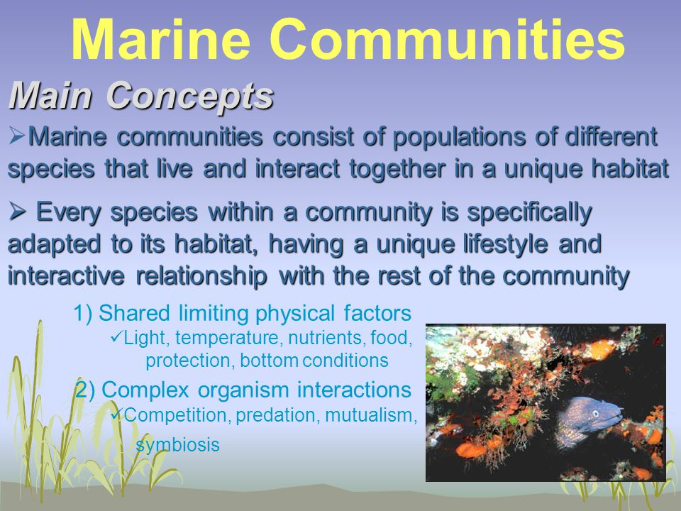 Main Concepts Marine communities consist of populations of different species that live and interact together in a unique habitat  Marine communities consist of populations of different species that live and interact together in a unique habitat  Every species within a community is specifically adapted to its habitat, having a unique lifestyle and interactive relationship with the rest of the community 1) Shared limiting physical factors Light, temperature, nutrients, food, protection, bottom conditions 2) Complex organism interactions Competition, predation, mutualism, symbiosis Marine Communities