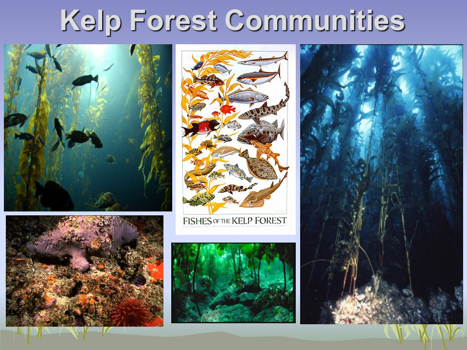Kelp Forest Communities