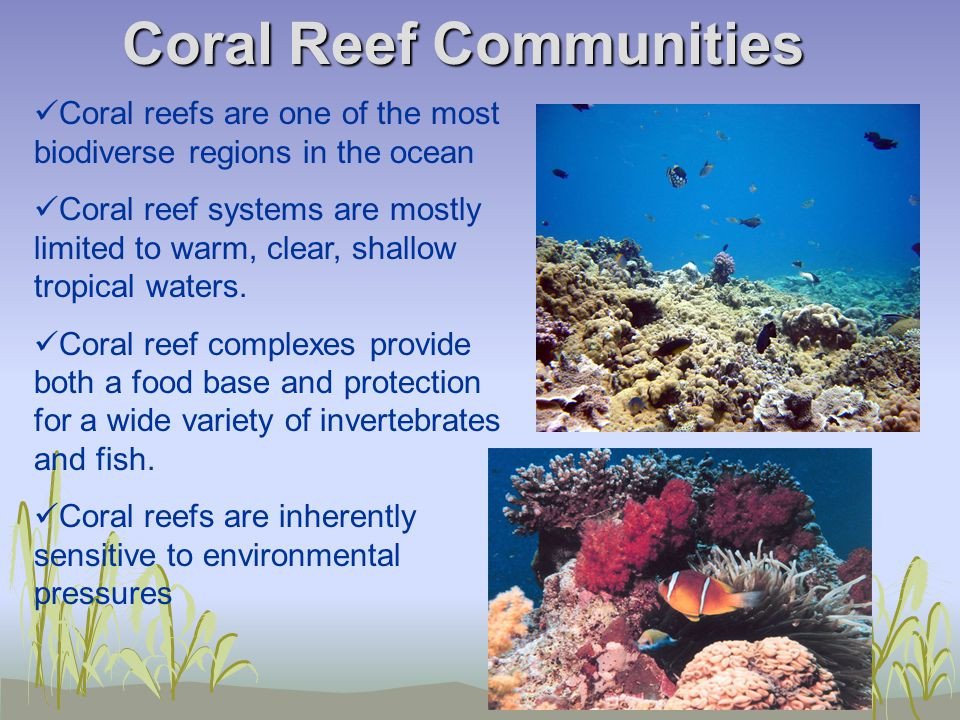 Coral Reef Communities Coral reefs are one of the most biodiverse regions in the ocean Coral reef systems are mostly limited to warm, clear, shallow tropical waters.
