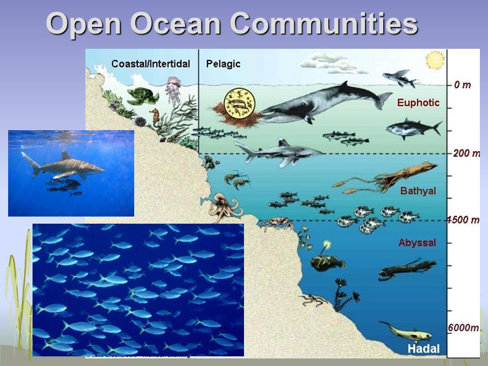Open Ocean Communities