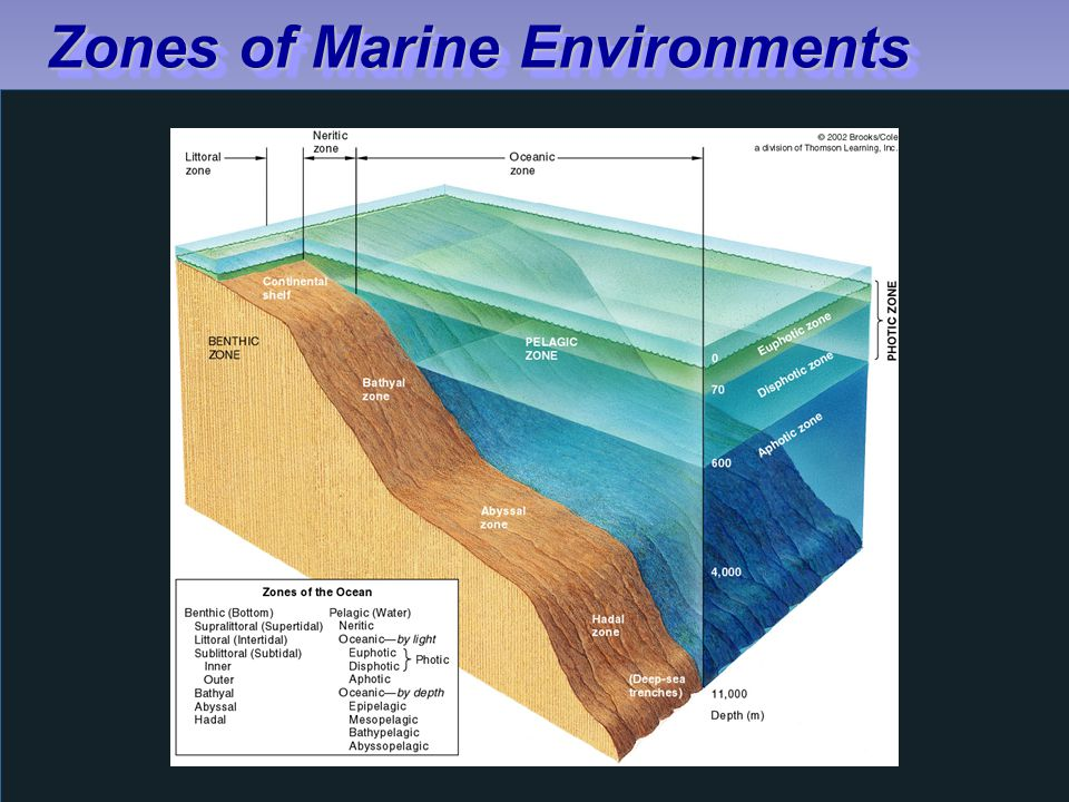 Zones of Marine Environments