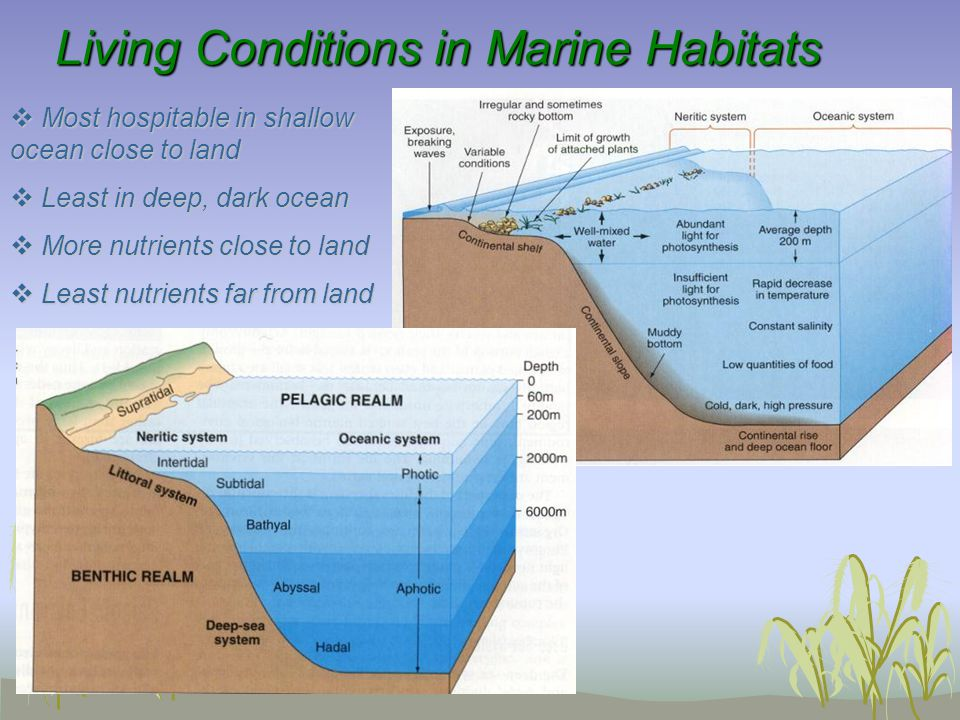 Living Conditions in Marine Habitats Living Conditions in Marine Habitats  Most hospitable in shallow ocean close to land  Least in deep, dark ocean  More nutrients close to land  Least nutrients far from land