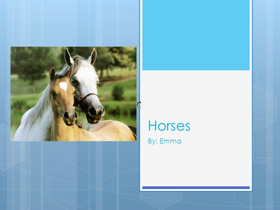 Horses By: Emma