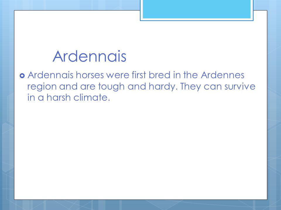Ardennais  Ardennais horses were first bred in the Ardennes region and are tough and hardy.