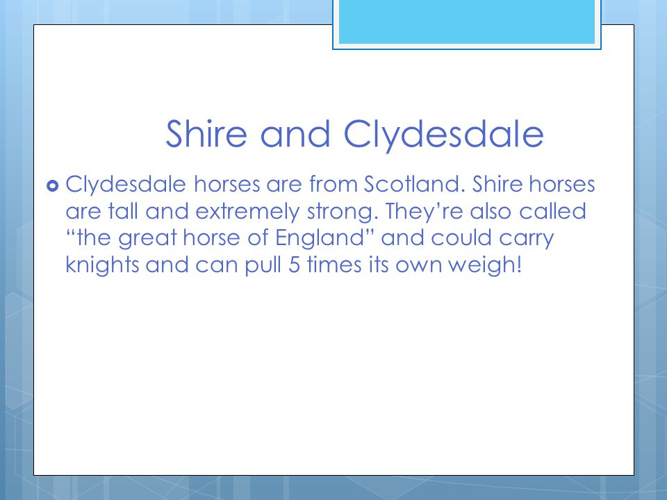 Shire and Clydesdale  Clydesdale horses are from Scotland.