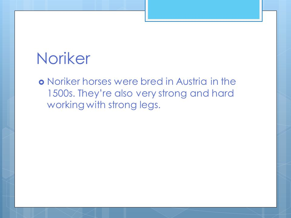 Noriker  Noriker horses were bred in Austria in the 1500s.
